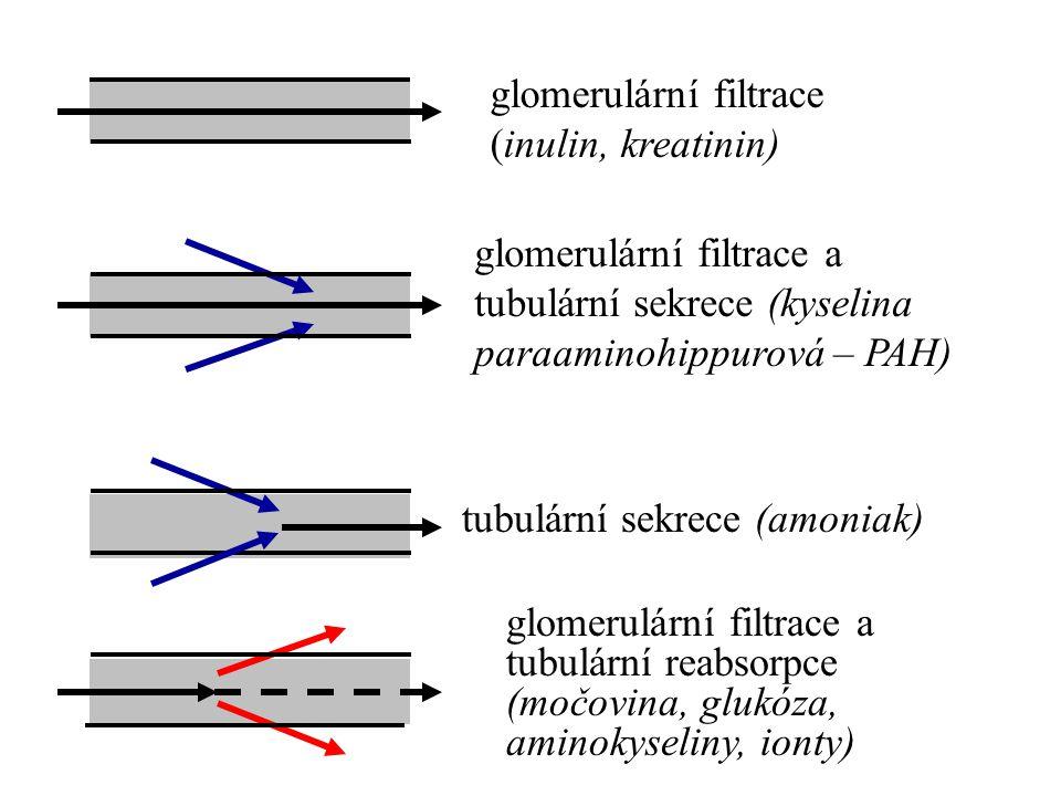 glomerulární filtrace (inulin, kreatinin) tubulární sekrece (amoniak) glomerulární filtrace a tubulární reabsorpce (močovina, glukóza, aminokyseliny,