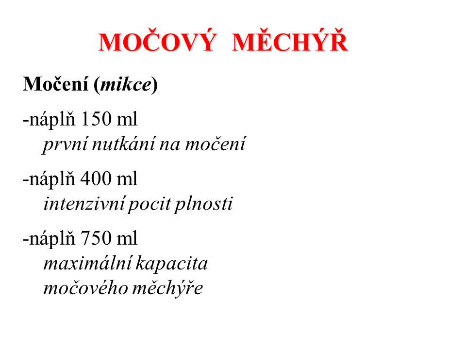 Močení (mikce) -náplň 150 ml první nutkání na močení -náplň 400 ml intenzivní pocit plnosti -náplň 750 ml maximální kapacita močového měchýře MOČOVÝ M