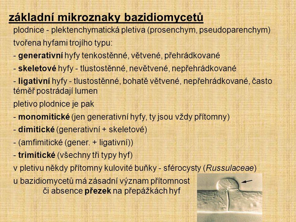 základní mikroznaky bazidiomycetů plodnice - plektenchymatická pletiva (prosenchym, pseudoparenchym) tvořena hyfami trojího typu: - generativní hyfy t