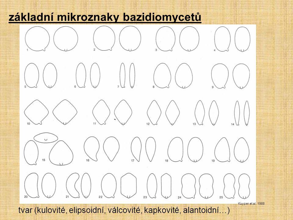 základní mikroznaky bazidiomycetů tvar (kulovité, elipsoidní, válcovité, kapkovité, alantoidní…) Kuyper et al. 1988