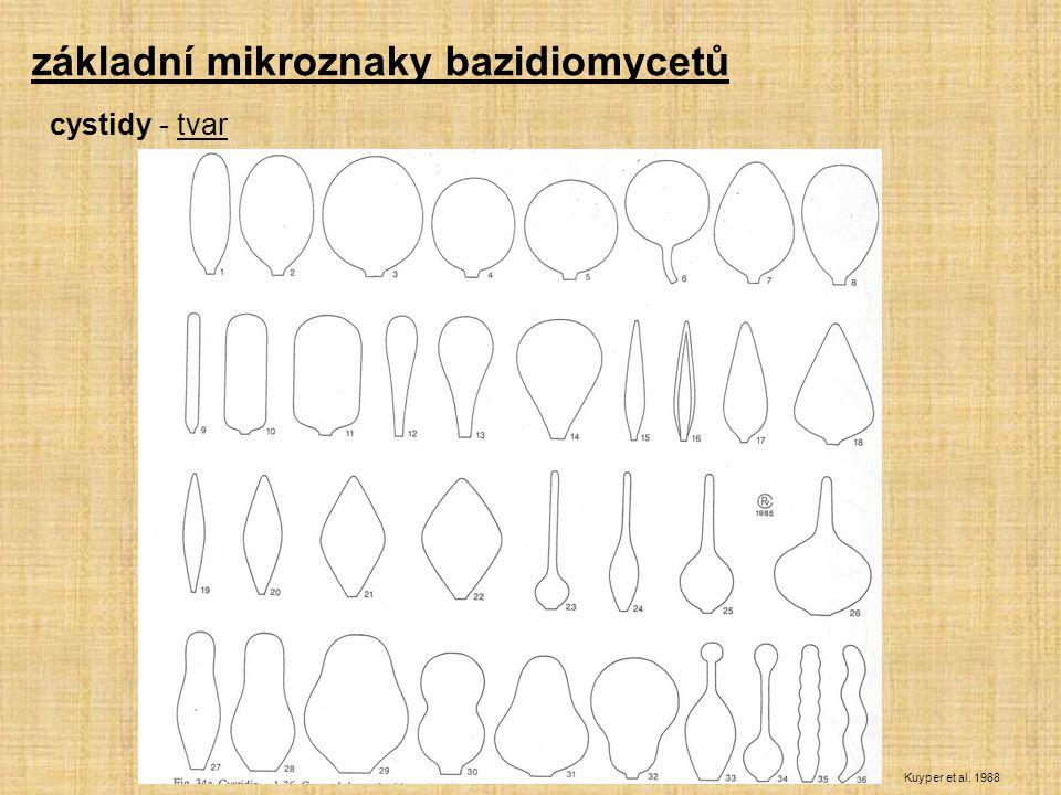 základní mikroznaky bazidiomycetů Kuyper et al. 1988 cystidy - tvar