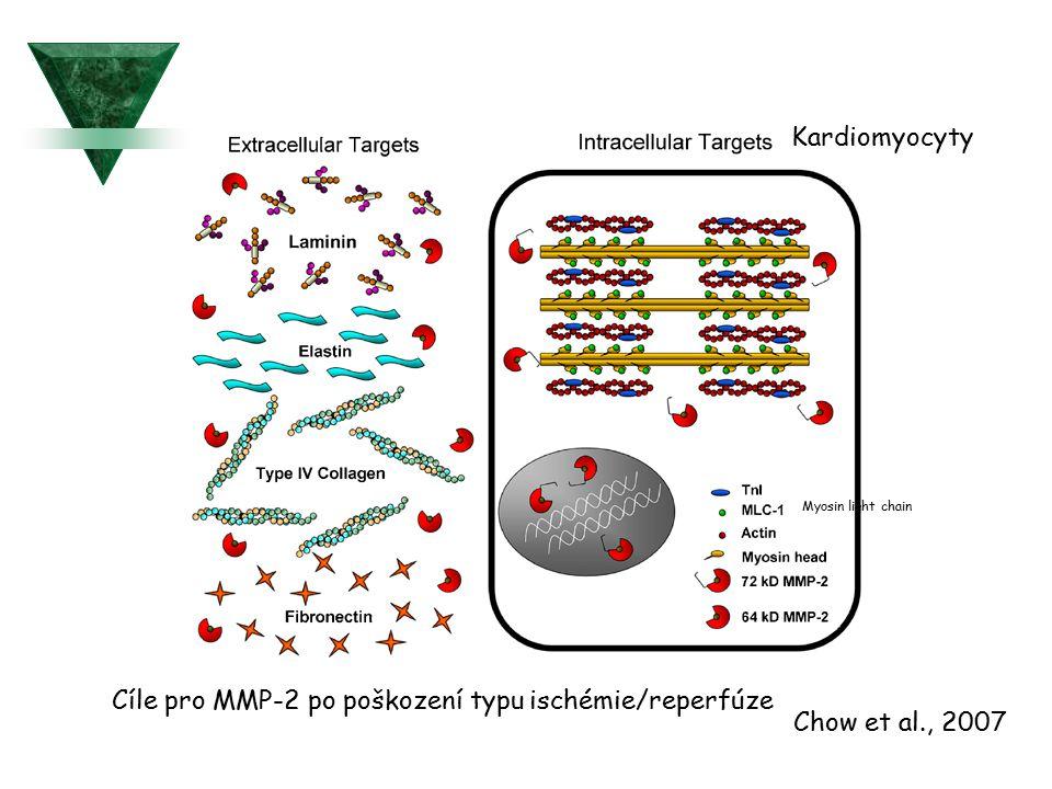 Cíle pro MMP-2 po poškození typu ischémie/reperfúze Kardiomyocyty Myosin light chain