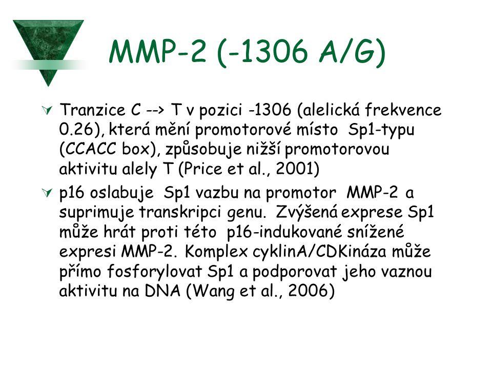 MMP-2 (-1306 A/G)  Tranzice C --> T v pozici -1306 (alelická frekvence 0.26), která mění promotorové místo Sp1-typu (CCACC box), způsobuje nižší prom