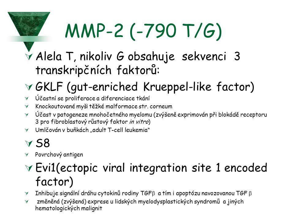 MMP-2 (-790 T/G)  Alela T, nikoliv G obsahuje sekvenci 3 transkripčních faktorů:  GKLF (gut-enriched Krueppel-like factor)  Účastní se proliferace