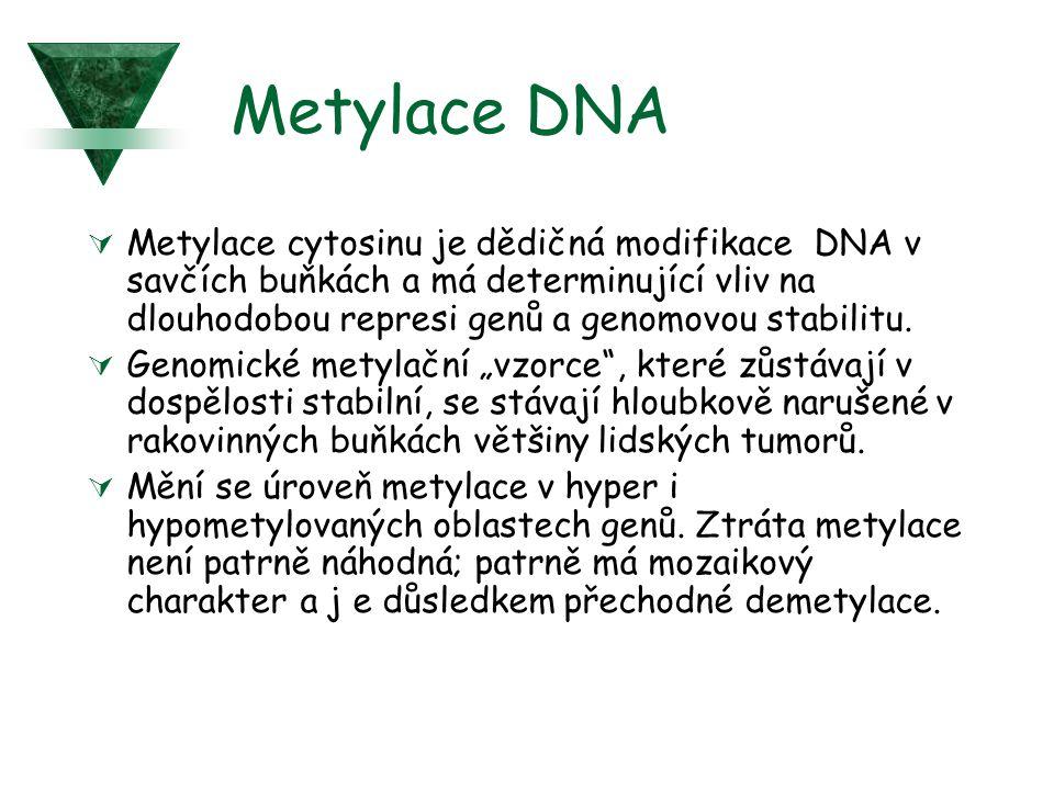 Metylace DNA  Metylace cytosinu je dědičná modifikace DNA v savčích buňkách a má determinující vliv na dlouhodobou represi genů a genomovou stabilitu