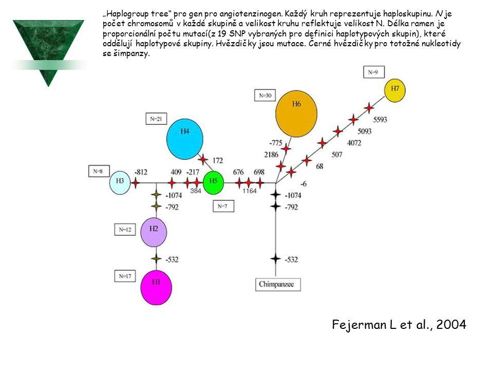 """""""Haplogroup tree"""" pro gen pro angiotenzinogen. Každý kruh reprezentuje haploskupinu. N je počet chromosomů v každé skupině a velikost kruhu reflektuje"""