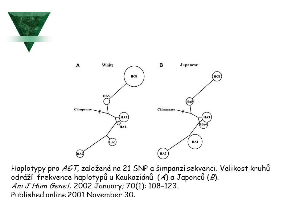 Haplotypy pro AGT, založené na 21 SNP a šimpanzí sekvenci. Velikost kruhů odráží frekvence haplotypů u Kaukaziánů (A) a Japonců (B). Am J Hum Genet. 2