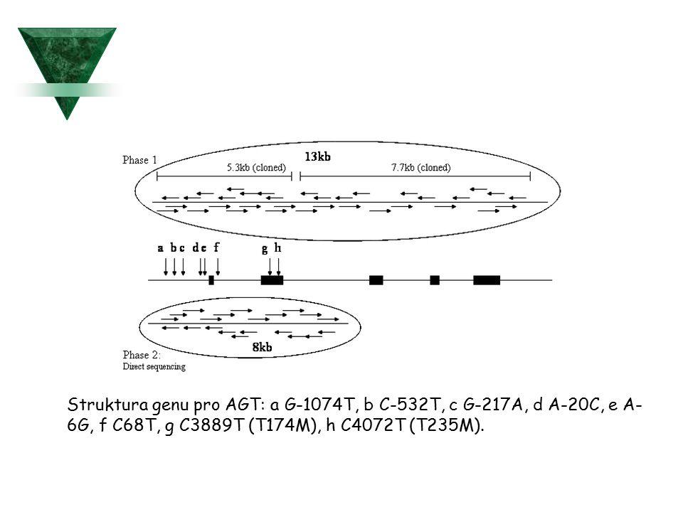 Struktura genu pro AGT: a G-1074T, b C-532T, c G-217A, d A-20C, e A- 6G, f C68T, g C3889T (T174M), h C4072T (T235M).
