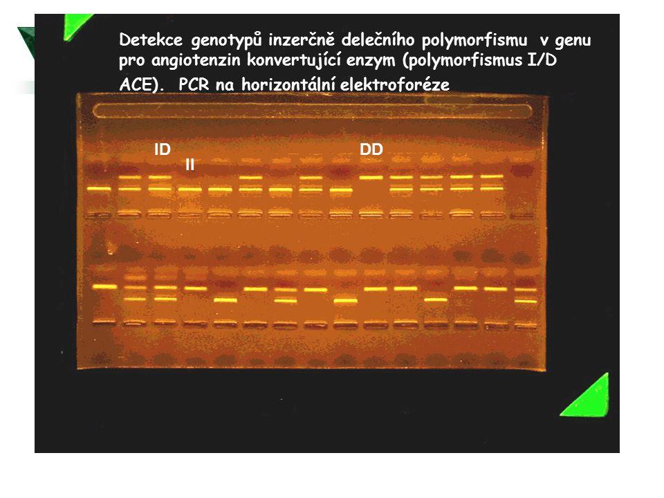 Detekce genotypů inzerčně delečního polymorfismu v genu pro angiotenzin konvertující enzym (polymorfismus I/D ACE). PCR na horizontální elektroforéze