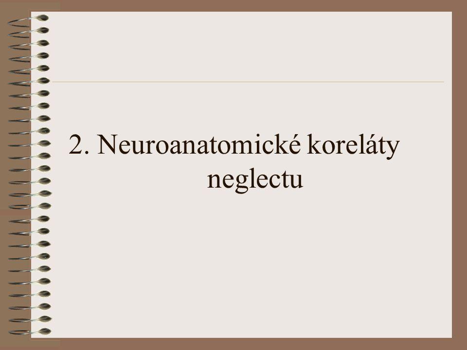 2. Neuroanatomické koreláty neglectu