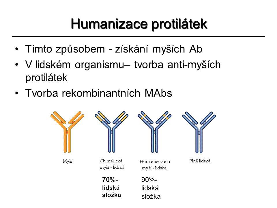 Humanizace protilátek Tímto způsobem - získání myších Ab V lidském organismu– tvorba anti-myších protilátek Tvorba rekombinantních MAbs 70%- lidská sl