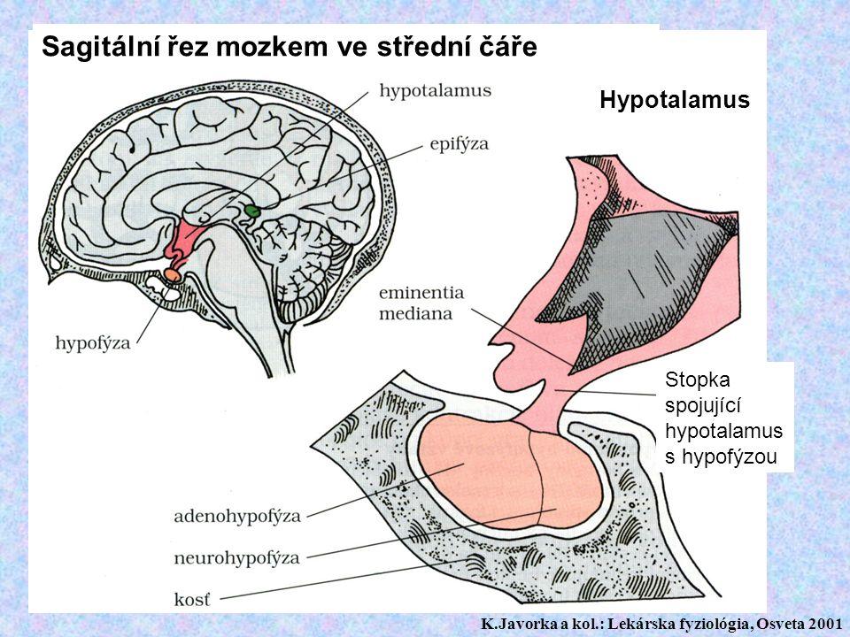 Sagitální řez mozkem ve střední čáře Hypotalamus Stopka spojující hypotalamus s hypofýzou K.Javorka a kol.: Lekárska fyziológia, Osveta 2001
