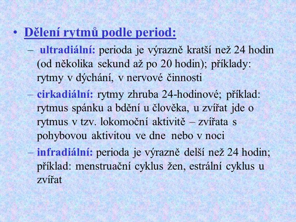 Dělení rytmů podle period: – ultradiální: perioda je výrazně kratší než 24 hodin (od několika sekund až po 20 hodin); příklady: rytmy v dýchání, v ner