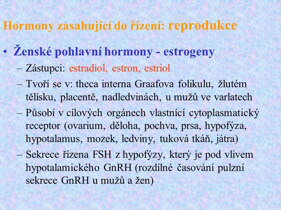 Hormony zasahující do řízení: reprodukce Ženské pohlavní hormony - estrogeny –Zástupci: estradiol, estron, estriol –Tvoří se v: theca interna Graafova