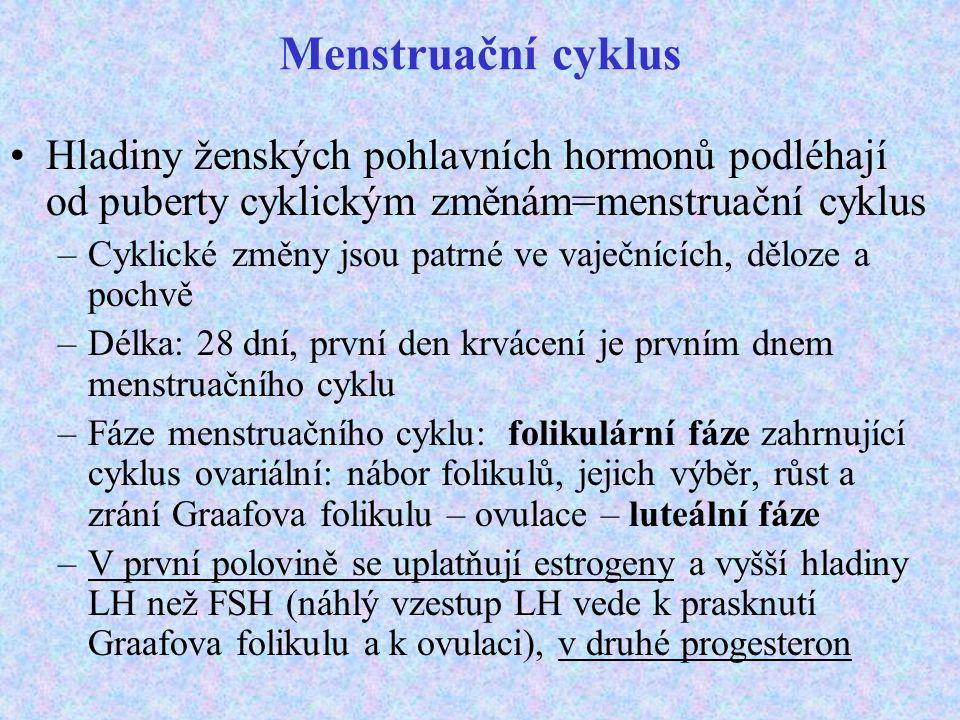 Menstruační cyklus Hladiny ženských pohlavních hormonů podléhají od puberty cyklickým změnám=menstruační cyklus –Cyklické změny jsou patrné ve vaječní