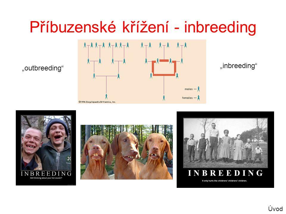 """Příbuzenské křížení - inbreeding """"outbreeding"""" """"inbreeding"""" Úvod"""