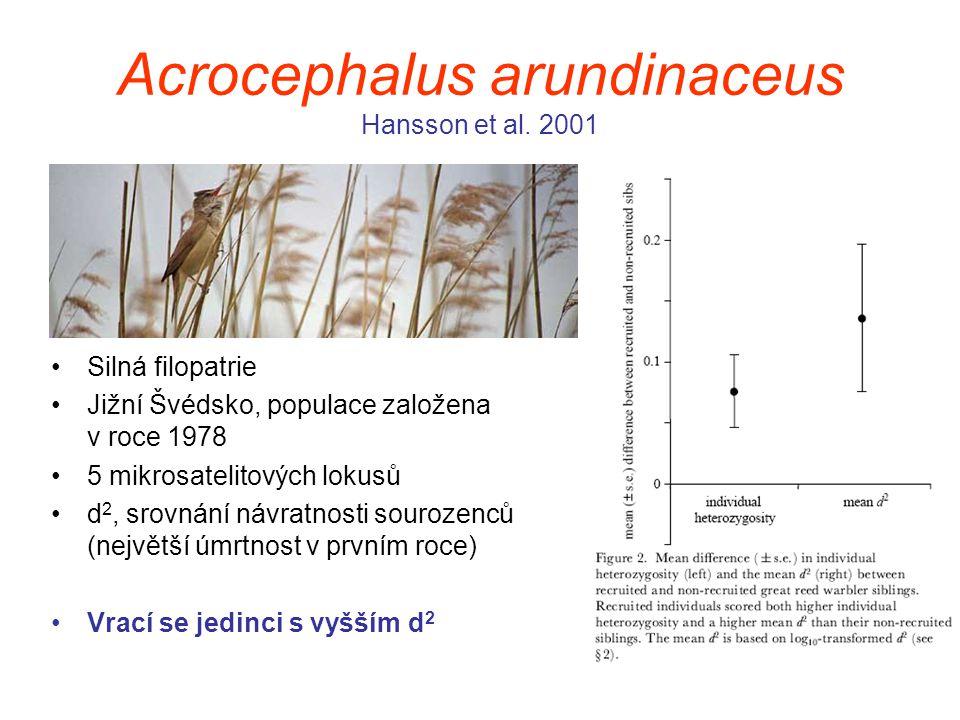 Acrocephalus arundinaceus Hansson et al. 2001 Silná filopatrie Jižní Švédsko, populace založena v roce 1978 5 mikrosatelitových lokusů d 2, srovnání n
