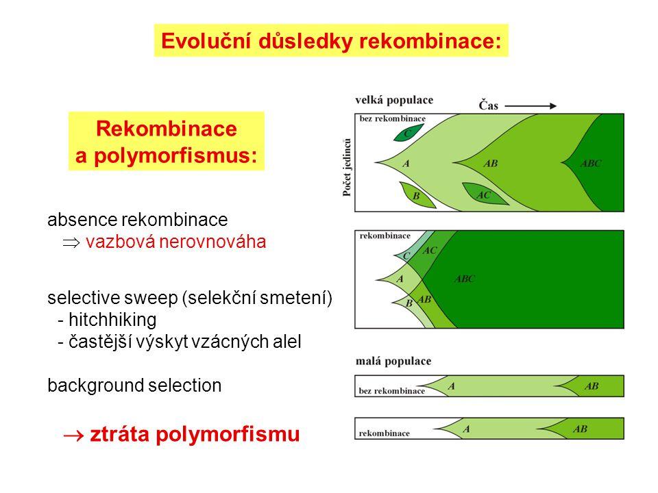 Rekombinace a polymorfismus: Evoluční důsledky rekombinace: absence rekombinace  vazbová nerovnováha selective sweep (selekční smetení) - hitchhiking - častější výskyt vzácných alel background selection  ztráta polymorfismu