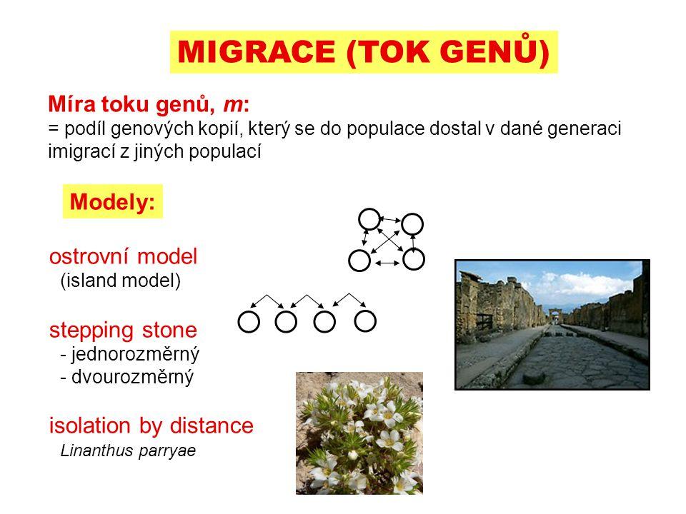 Míra toku genů, m: = podíl genových kopií, který se do populace dostal v dané generaci imigrací z jiných populací Modely: ostrovní model (island model