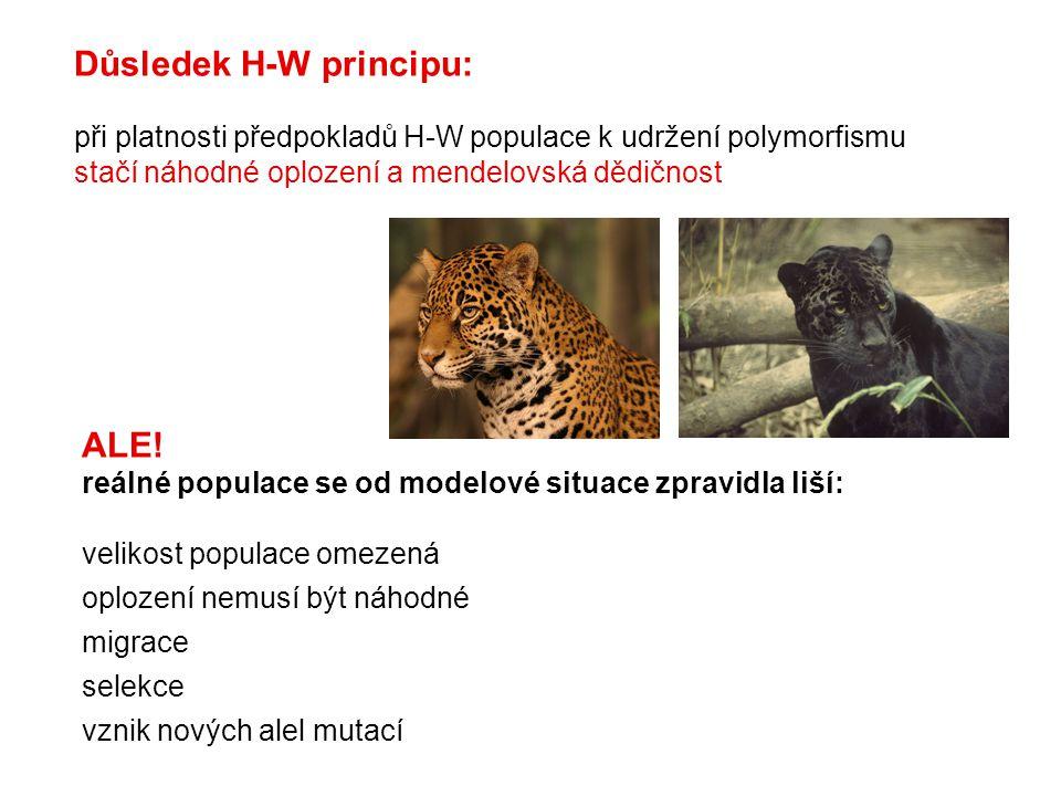 Důsledek H-W principu: při platnosti předpokladů H-W populace k udržení polymorfismu stačí náhodné oplození a mendelovská dědičnost ALE.