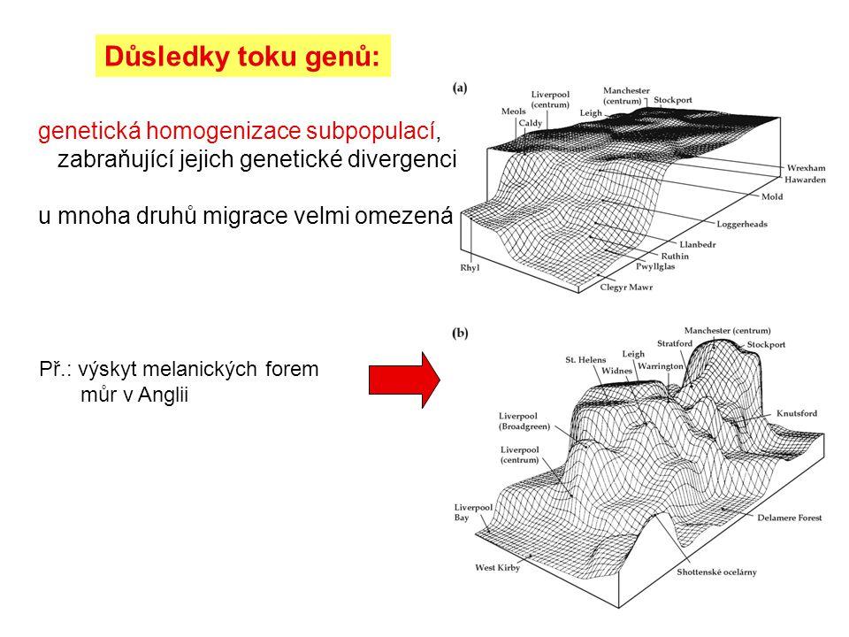 Důsledky toku genů: genetická homogenizace subpopulací, zabraňující jejich genetické divergenci u mnoha druhů migrace velmi omezená Př.: výskyt melani
