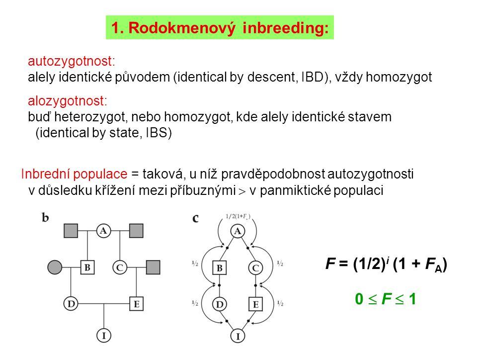 1. Rodokmenový inbreeding: autozygotnost: alely identické původem (identical by descent, IBD), vždy homozygot alozygotnost: buď heterozygot, nebo homo