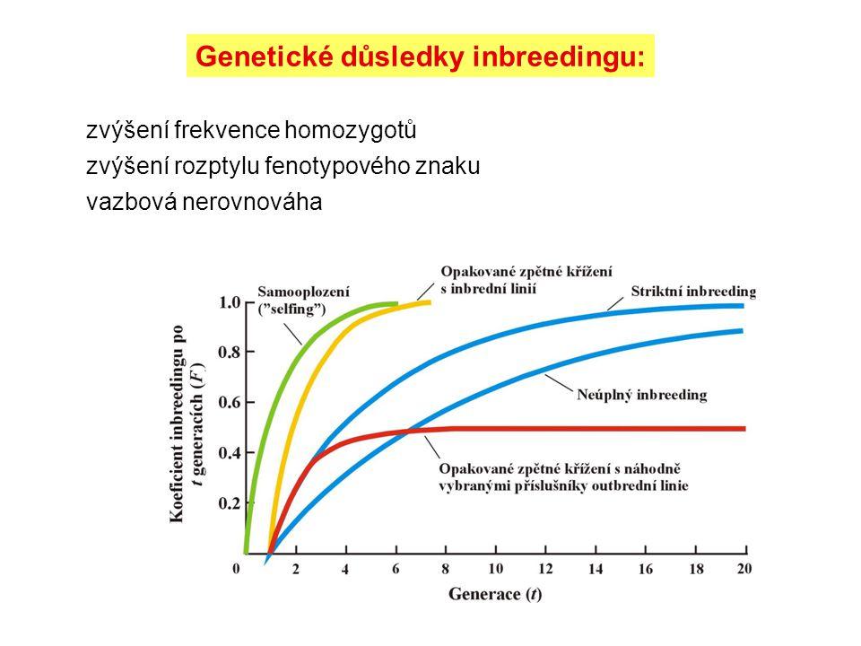 Genetické důsledky inbreedingu: zvýšení frekvence homozygotů zvýšení rozptylu fenotypového znaku vazbová nerovnováha