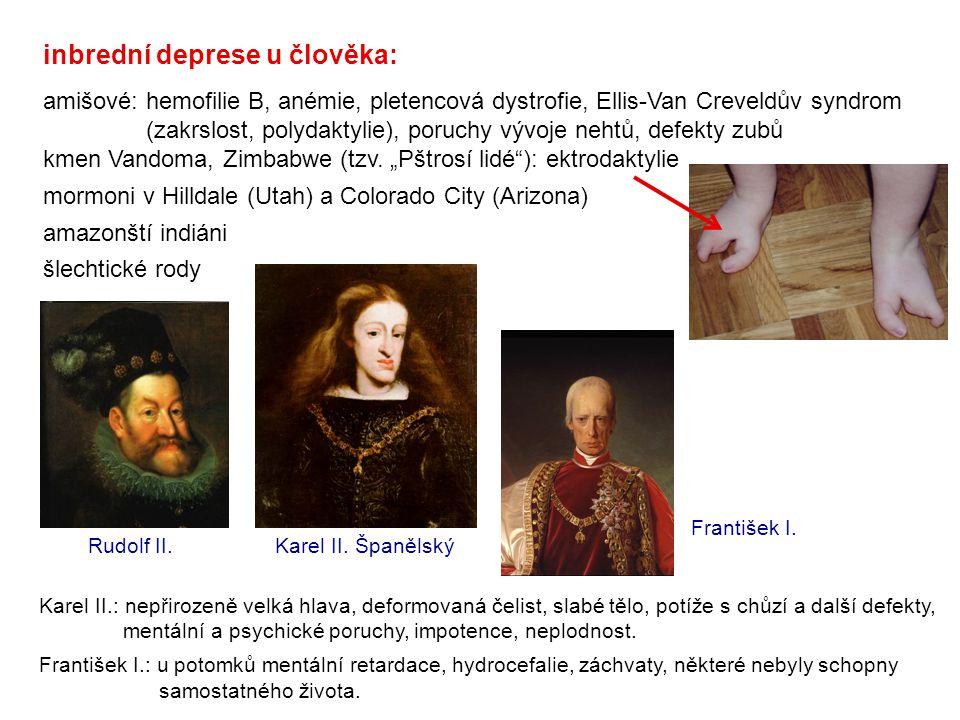 Rudolf II. inbrední deprese u člověka: amišové: hemofilie B, anémie, pletencová dystrofie, Ellis-Van Creveldův syndrom (zakrslost, polydaktylie), poru