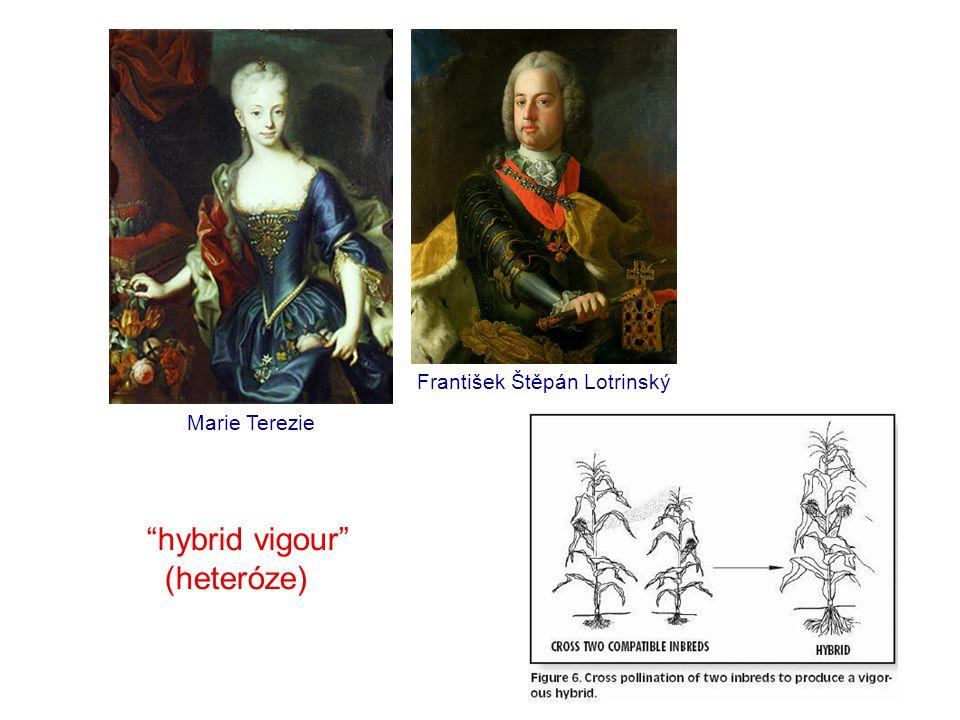 """hybrid vigour"" (heteróze) František Štěpán Lotrinský Marie Terezie"