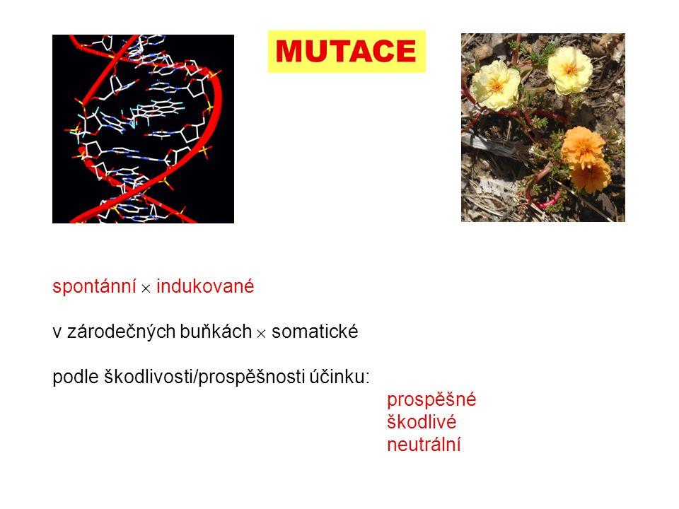 MUTACE spontánní  indukované v zárodečných buňkách  somatické podle škodlivosti/prospěšnosti účinku: prospěšné škodlivé neutrální 