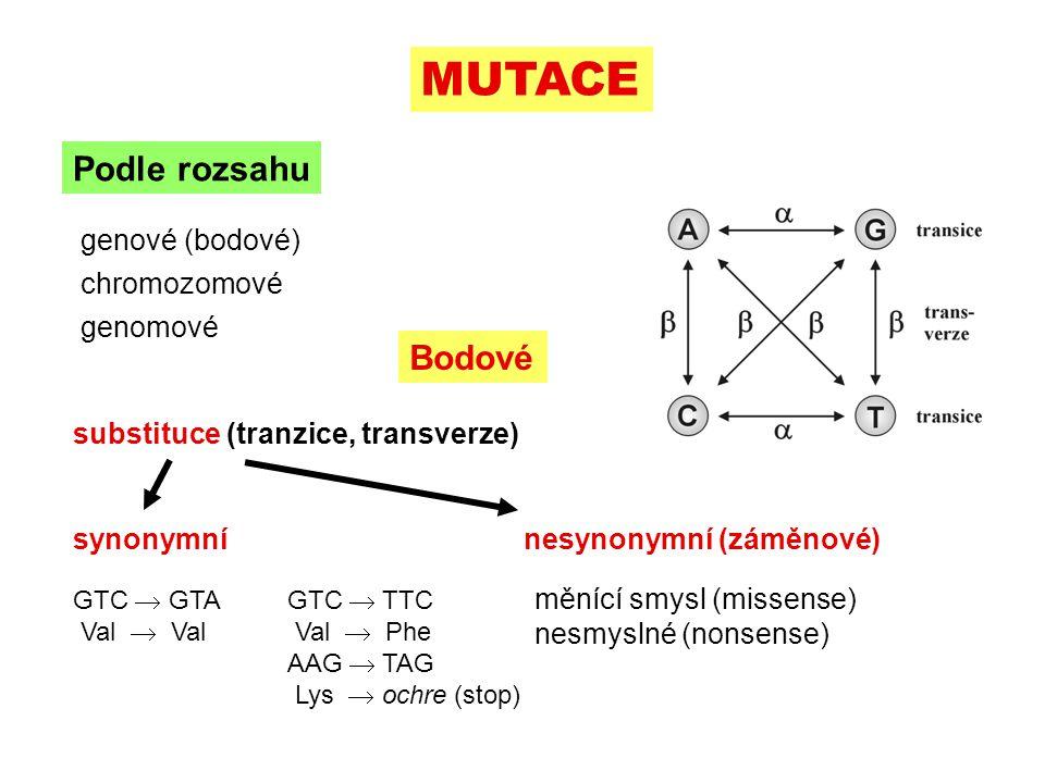 substituce (tranzice, transverze) MUTACE Podle rozsahu genové (bodové) chromozomové genomové Bodové synonymní nesynonymní (záměnové) měnící smysl (missense) nesmyslné (nonsense) GTC  GTA Val  Val GTC  TTC Val  Phe AAG  TAG Lys  ochre (stop)