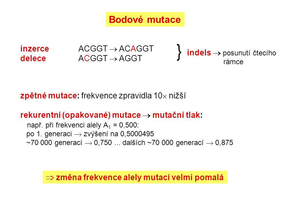 indels  posunutí čtecího rámce }  změna frekvence alely mutací velmi pomalá inzerceACGGT  ACAGGT deleceACGGT  AGGT Bodové mutace zpětné mutace: frekvence zpravidla 10  nižší rekurentní (opakované) mutace  mutační tlak: např.