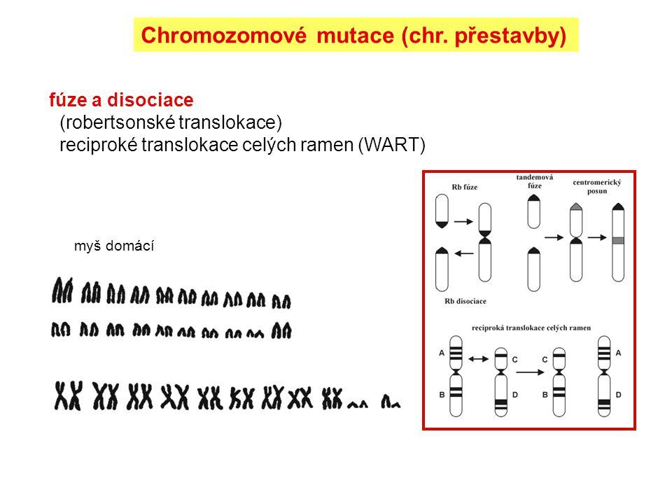 fúze a disociace (robertsonské translokace) reciproké translokace celých ramen (WART) myš domácí