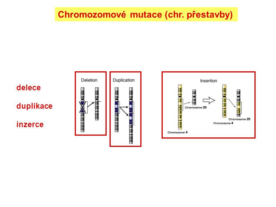 delece duplikace inzerce Chromozomové mutace (chr. přestavby)