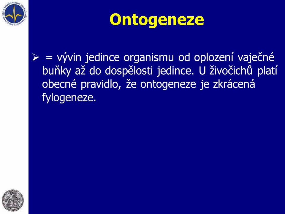 Ontogeneze  = vývin jedince organismu od oplození vaječné buňky až do dospělosti jedince. U živočichů platí obecné pravidlo, že ontogeneze je zkrácen