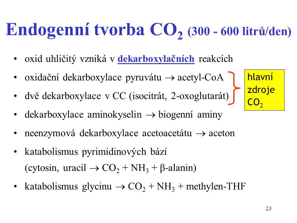 23 Endogenní tvorba CO 2 (300 - 600 litrů/den) oxid uhličitý vzniká v dekarboxylačních reakcích oxidační dekarboxylace pyruvátu  acetyl-CoA dvě dekarboxylace v CC (isocitrát, 2-oxoglutarát) dekarboxylace aminokyselin  biogenní aminy neenzymová dekarboxylace acetoacetátu  aceton katabolismus pyrimidinových bází (cytosin, uracil  CO 2 + NH 3 + β-alanin) katabolismus glycinu  CO 2 + NH 3 + methylen-THF hlavní zdroje CO 2