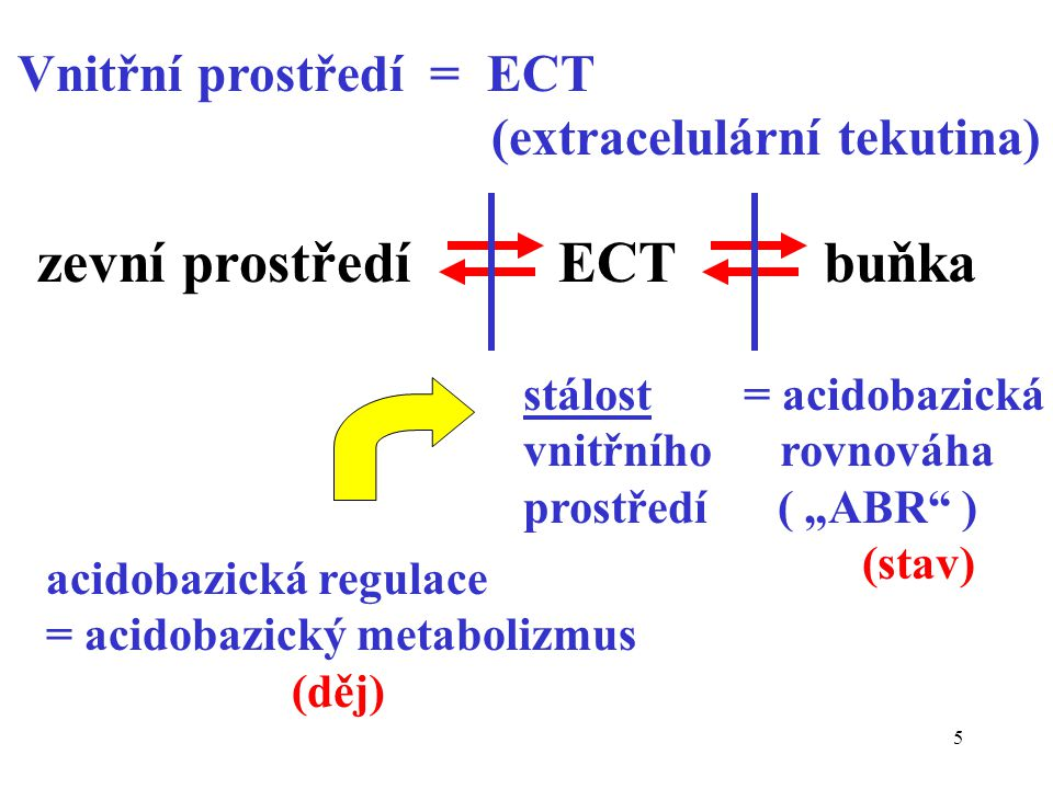 5 Vnitřní prostředí = ECT (extracelulární tekutina) zevní prostředí ECT buňka acidobazická regulace = acidobazický metabolizmus (děj) stálost = acidob