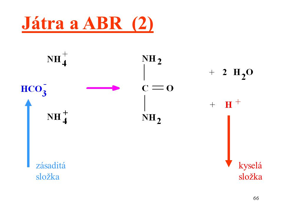 66 Játra a ABR (2) zásaditá složka kyselá složka