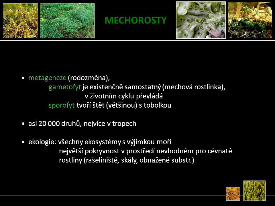 MECHOROSTY metageneze (rodozměna), gametofyt je existenčně samostatný (mechová rostlinka), v životním cyklu převládá sporofyt tvoří štět (většinou) s