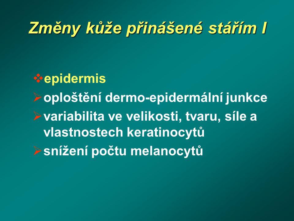 Změny kůže přinášené stářím I  epidermis  oploštění dermo-epidermální junkce  variabilita ve velikosti, tvaru, síle a vlastnostech keratinocytů  s