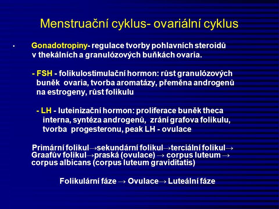 Menstruační cyklus- ovariální cyklus Gonadotropiny- regulace tvorby pohlavních steroidů v thekálních a granulózových buňkách ovaria. - FSH - folikulos