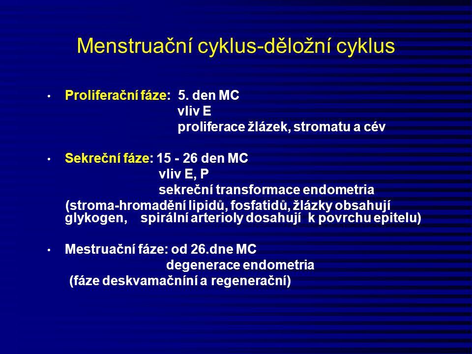 Menstruační cyklus-děložní cyklus Proliferační fáze: 5. den MC vliv E proliferace žlázek, stromatu a cév Sekreční fáze: 15 - 26 den MC vliv E, P sekre