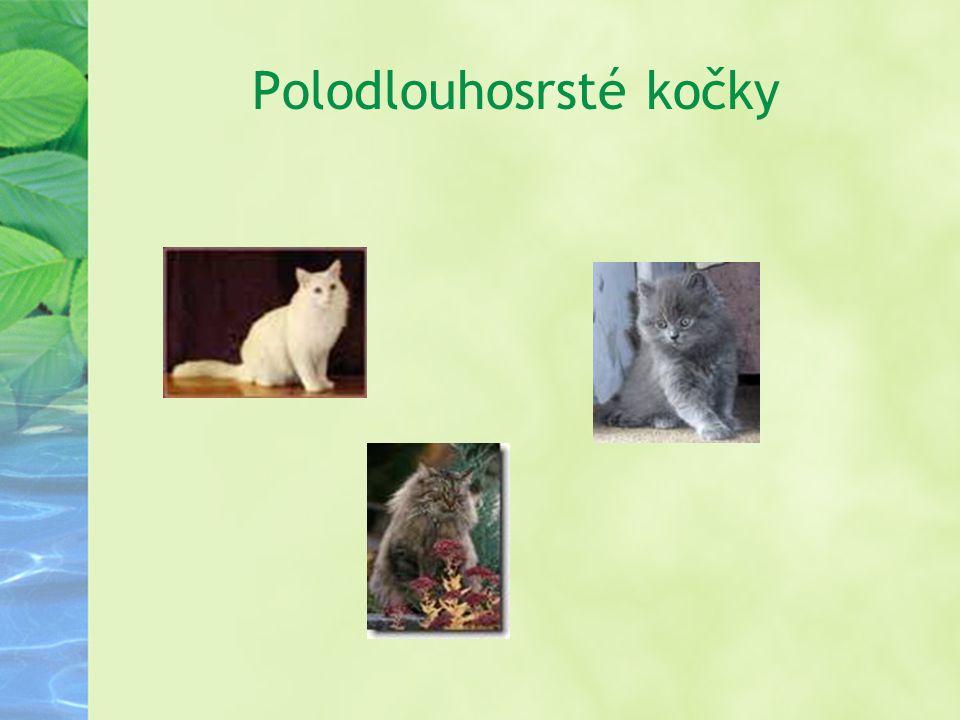 Polodlouhosrsté kočky