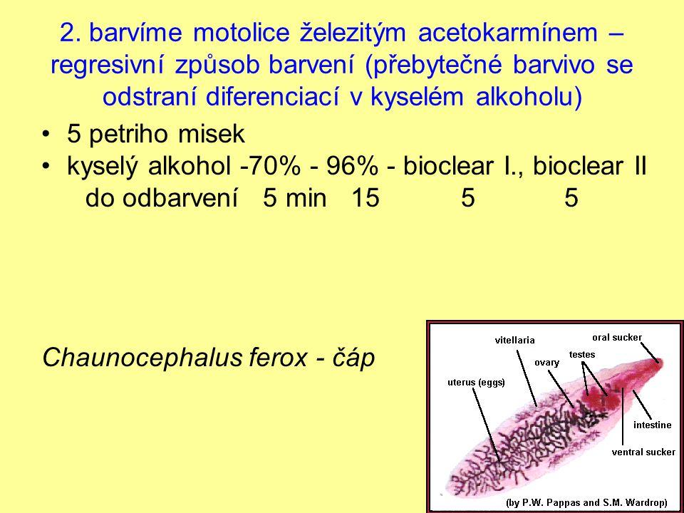 2. barvíme motolice železitým acetokarmínem – regresivní způsob barvení (přebytečné barvivo se odstraní diferenciací v kyselém alkoholu) 5 petriho mis