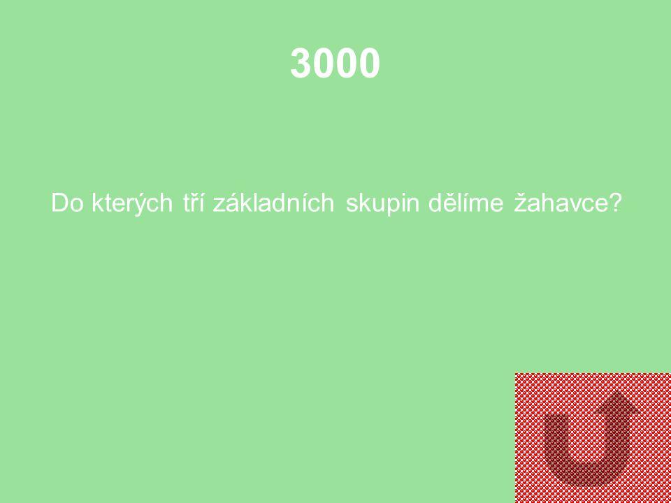 2000 Jak jedním slovem nazýváme jednobuněčné živočichy?