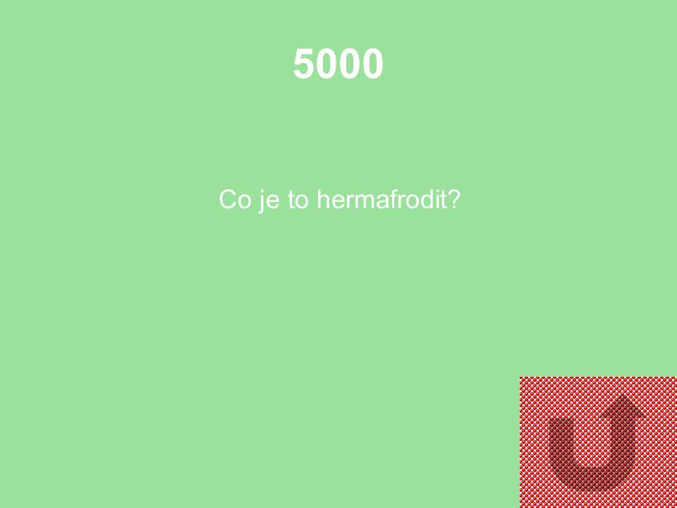 4000 Uveďte jeden druh (stačí rod) neparazitických ploštěnců.