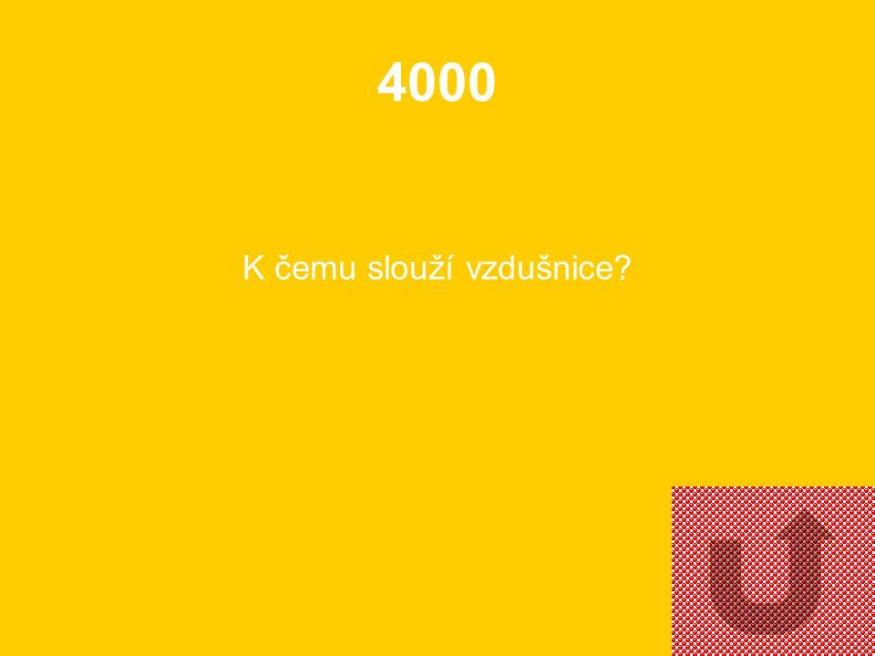 3000 Co je to kutikula?