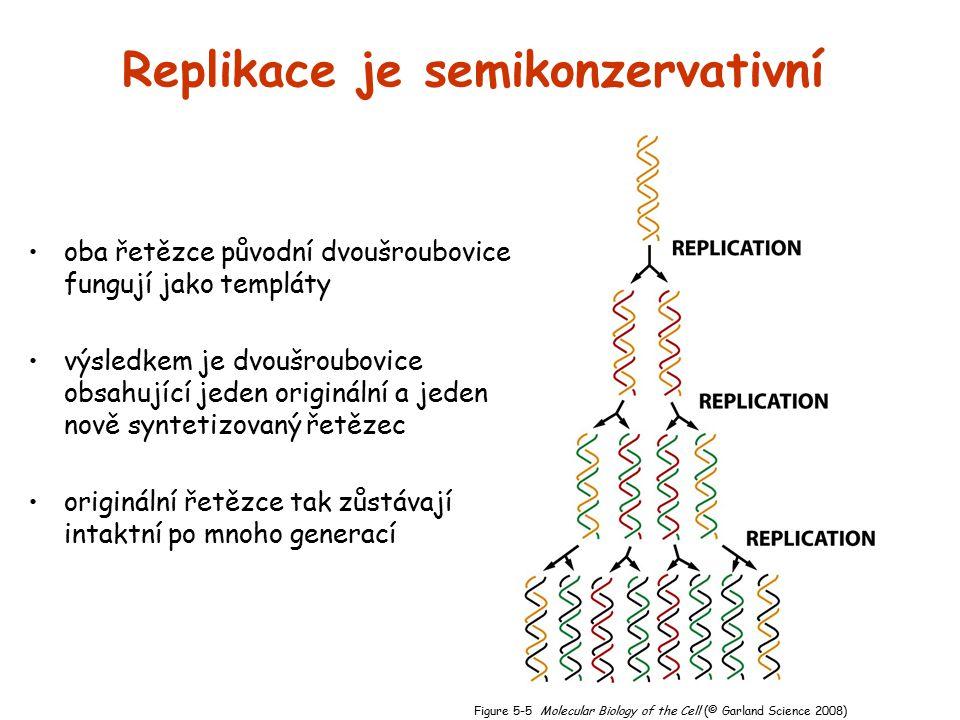 Replikace je semikonzervativní oba řetězce původní dvoušroubovice fungují jako templáty výsledkem je dvoušroubovice obsahující jeden originální a jede