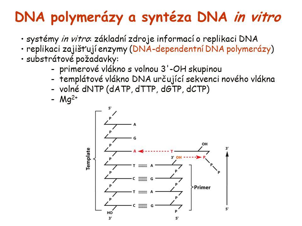 DNA polymerázy a syntéza DNA in vitro systémy in vitro: základní zdroje informací o replikaci DNA replikaci zajišťují enzymy (DNA-dependentní DNA poly