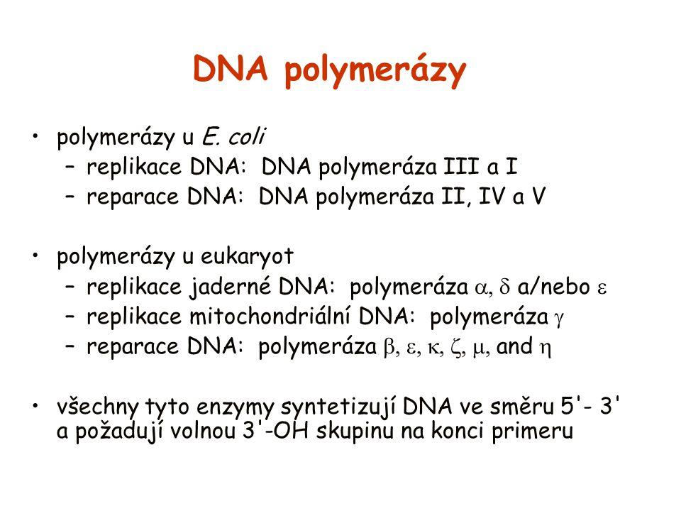 DNA polymerázy polymerázy u E. coli –replikace DNA: DNA polymeráza III a I –reparace DNA: DNA polymeráza II, IV a V polymerázy u eukaryot –replikace j
